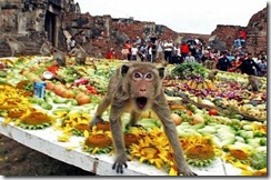 what_ya_lookin_at_Monkey_Buffet_Festival